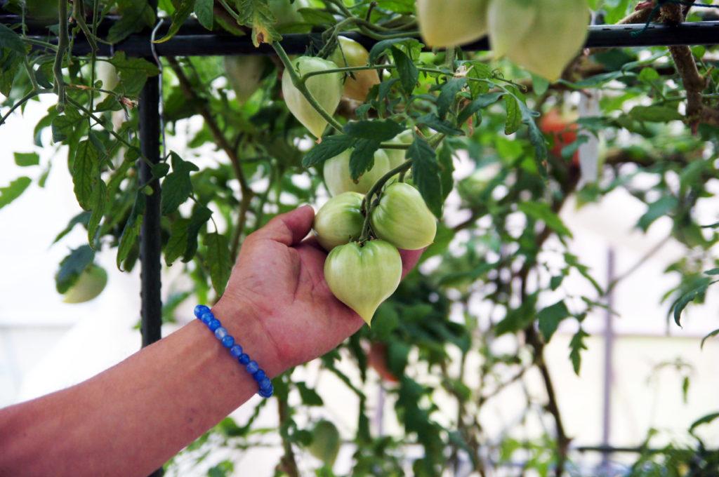 リンゴの木  自動的に生成された説明